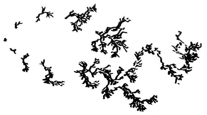 estructuras_emergentes