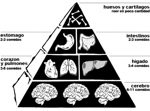 piramide-alimenticia-del-zombie